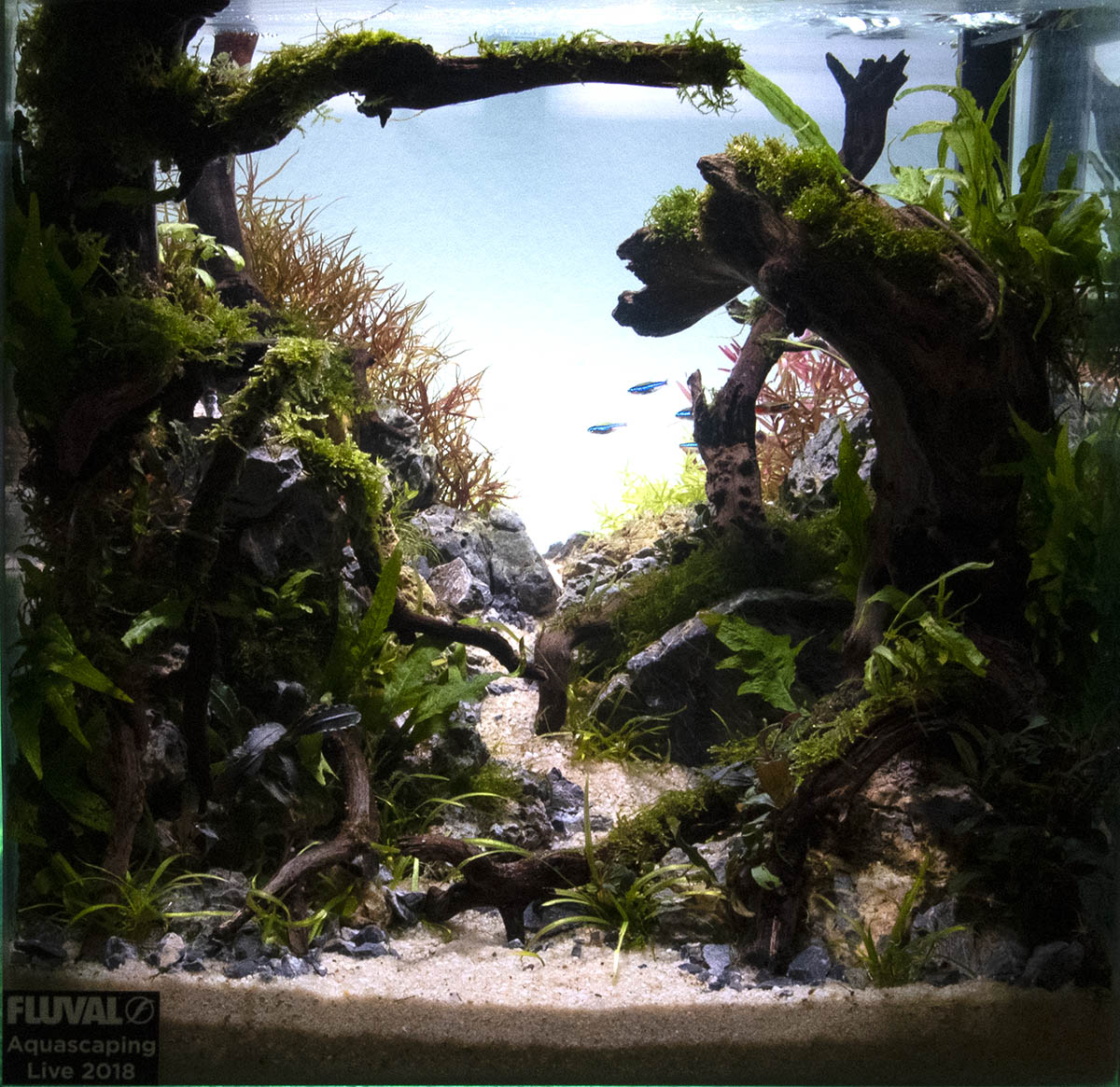 Aquascape_5008